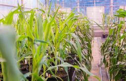 AgTech plants